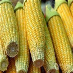 生产甜玉米设备厂家