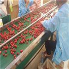 6GFJC-75红灯樱桃分选设备多种水果快速分级不伤果