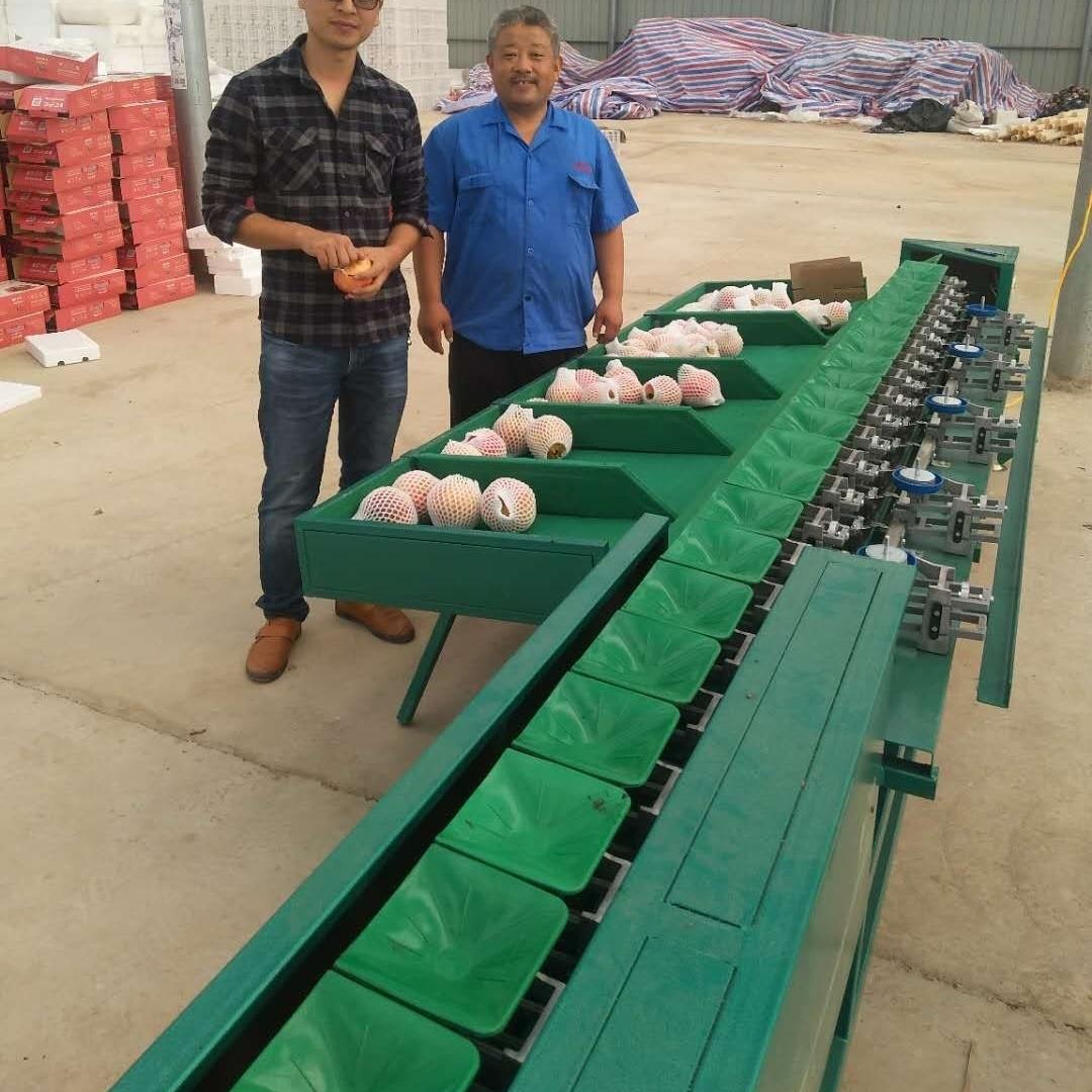 泗县小型红薯选果机占地面积小实用的设备