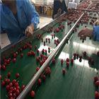 6GFJC-75北京樱桃直径式选果机 水包膜技术 不伤果
