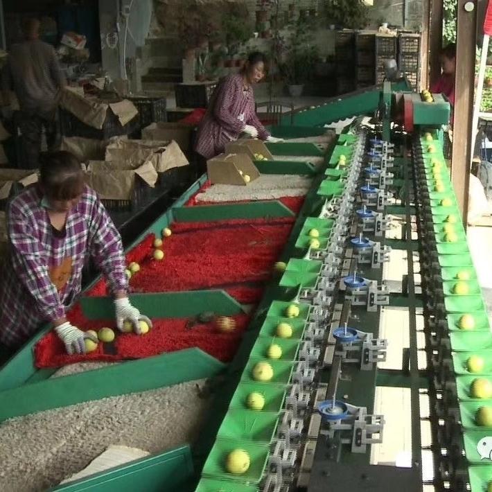 阿克苏苹果分选机多种水果适用节省成本