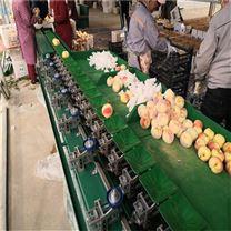 阳山水蜜桃分选机 提升桃质量的设备