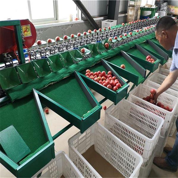 西红柿选果机自动分级不伤果欢迎选购