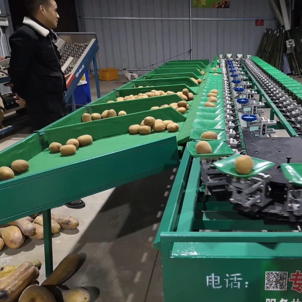 宝鸡猕猴桃选果机 机械式 水果分选机