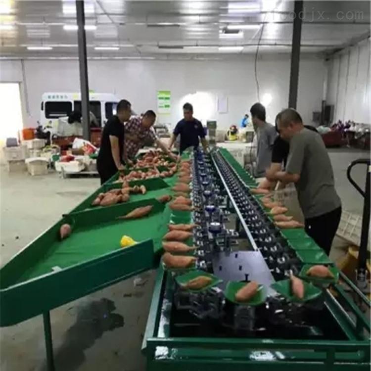 澄迈桥头红薯分选机 重量分级机 防碰果