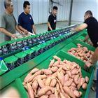 XGJ-SZ广东湛江红薯分选机 分大小等级的机器