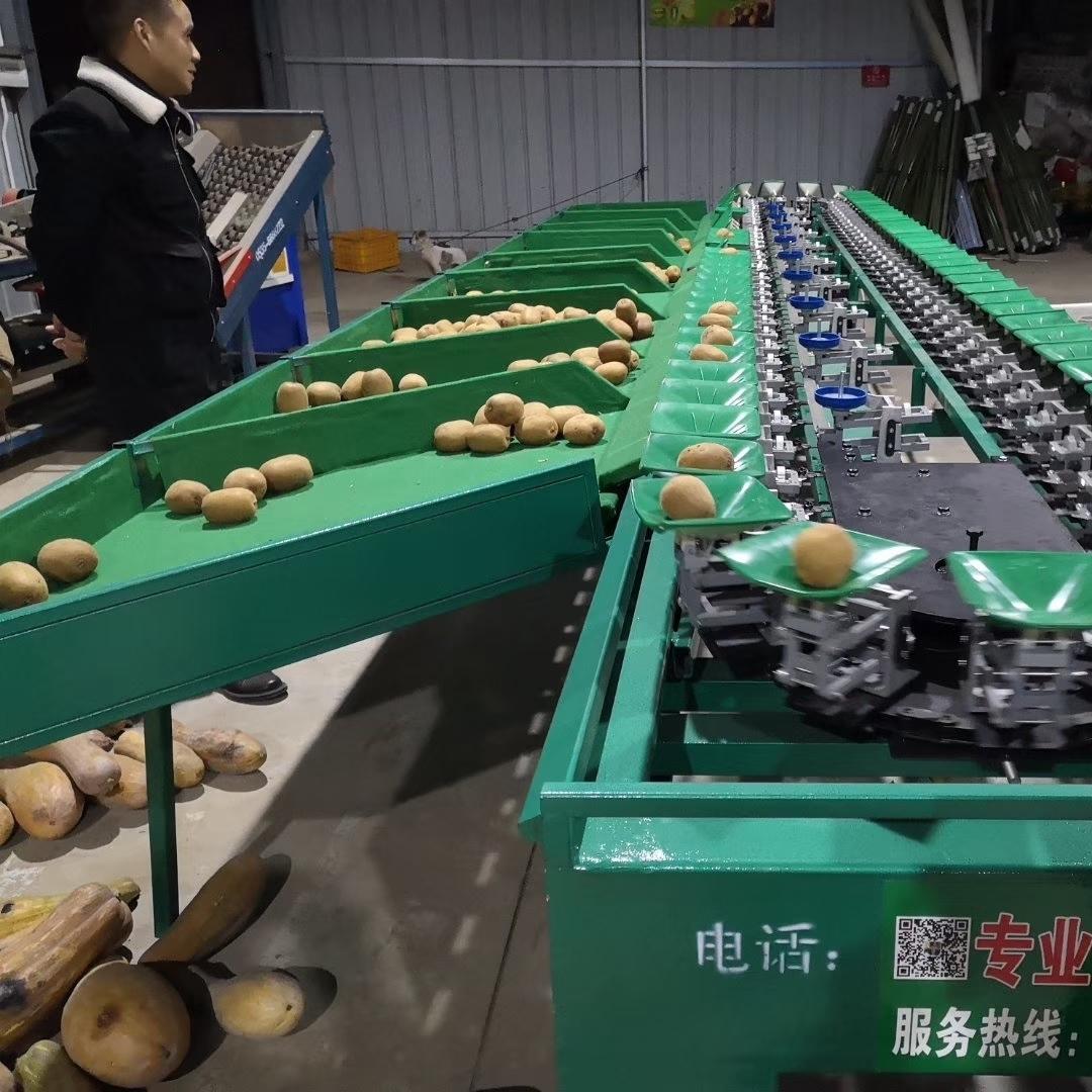 陕西渭南红心猕猴桃分选机 机械分级效率高