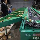 XGJ-SZ猕猴桃分级设备挑选水果大小的机器分果机