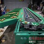 XGJ-SZ四川都江堰猕猴桃选果机  快速分级不伤果