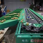 XGJ-SZ陕西猕猴桃分级设备 水果选果机分果机