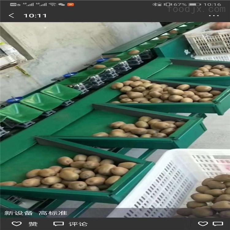 四川红阳猕猴桃选果机 水果分选机