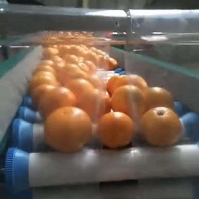 红美人柑橘筛选机  象山果蔬分级设备