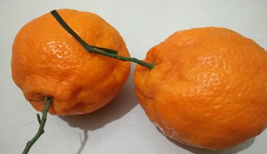 智能分選生產線甄選品質鮮果 水果產業迎分級銷售良機