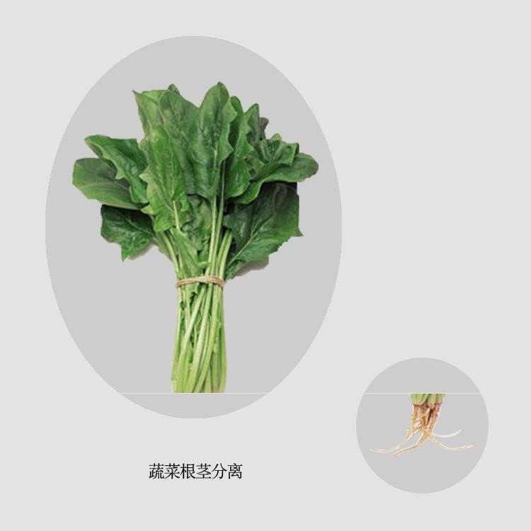 蔬菜去根机可将菠菜去根