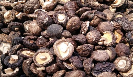 《香菇酱》《香菇浓缩汁》标准发布 深加工产业向高质量发展