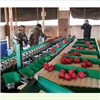 XGJ-Z云南火龙果选果机 可同时分选多种水果